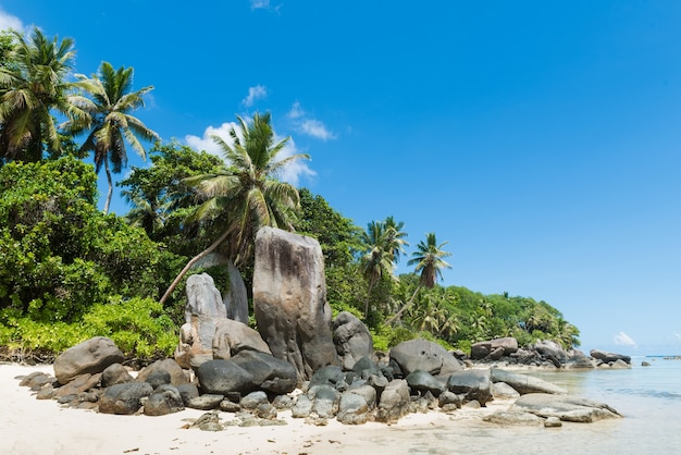 Huge stones and palm on sandy beach