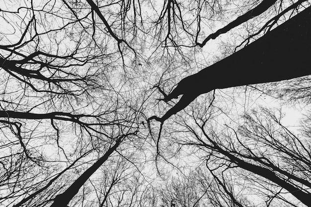 Огромные деревья в лесу с хмурым небом