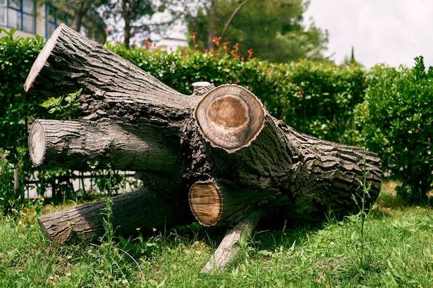 На зеленой траве среди кустов лежит огромный ствол срезанного ветвистого дерева.