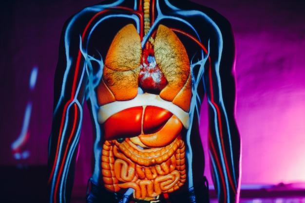 Human anatomy internal organs on man body.