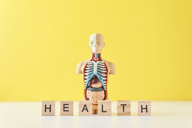 Human anatomy mannequin with internal organs and word health on a yellow background. medical health concept