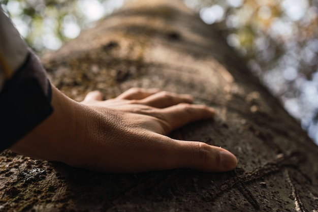Human beings are concerned about nature and the environment- hand touching a tree trunk in the forest.