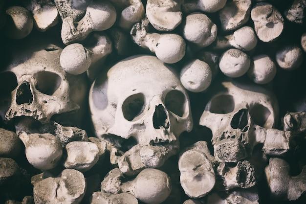 背景としての人間の骨と頭蓋骨