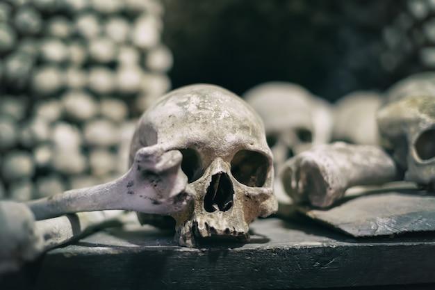 Human bones and skulls close up