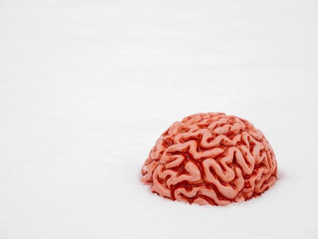 Человеческий мозг в снегу зимой.