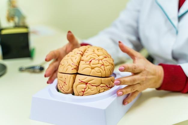 Модель человеческого мозга на столе. анатомия мозга человека. 3d-рендеринг. концепция нейрохирургии.
