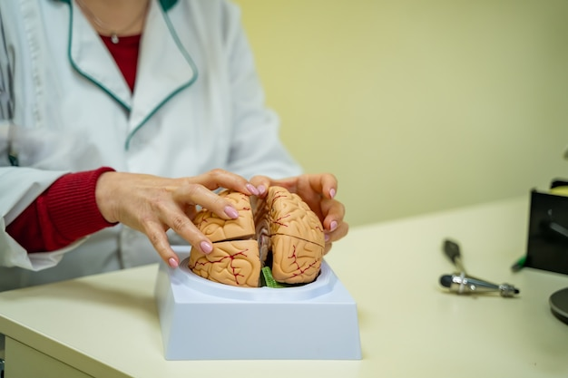 테이블에 인간 두뇌 모델입니다. 뇌 인체 해부학. 신경외과 허머. 의사는 뇌 모델에 대한 치료 방법을 보여줍니다.