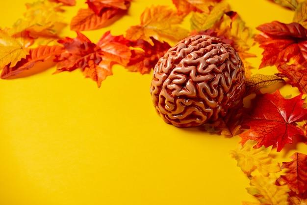 Человеческий мозг с осенними листьями на желтом фоне. вид сверху