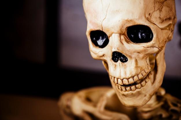 Human decorative skull in close-up