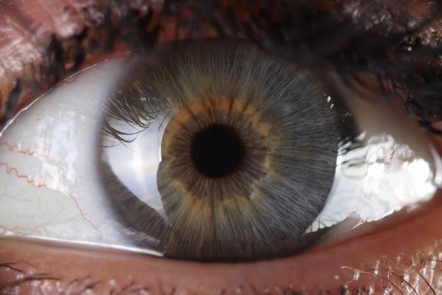 Human eye and anatomy of pupil and cornea