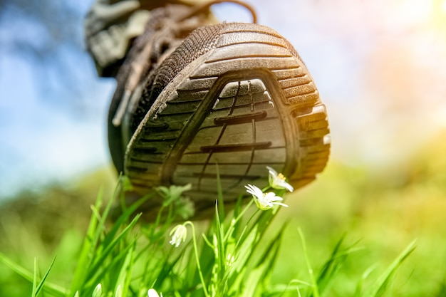 Нога человека в обуви топчет белые цветы на зеленом поле