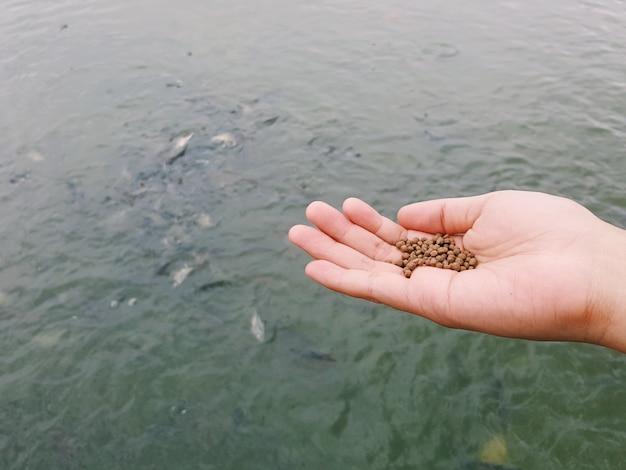 Человеческая рука несет куски рыбной пищи и кормит местных рыб в реке