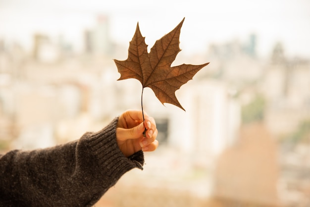 Human hand holding autumn leave