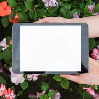 Mano umana che tiene compressa digitale con schermo bianco vuoto sopra i fiori freschi