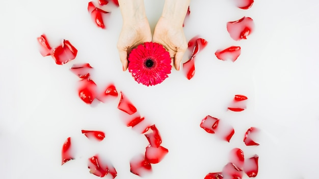 Human hand holding flower over petals floating on water