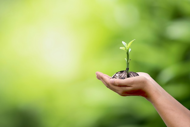Human hand holding growing plant with natural greenery blurred background.