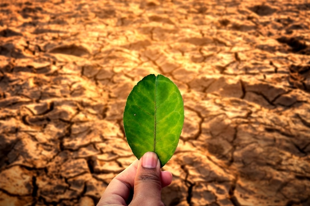 Human hand holding leaf on cracked dry ground environmental problems.