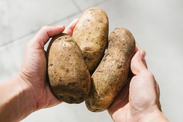 Human hand holding organic potatoes