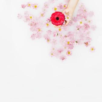 인간의 손을 흰색 표면에 빨간색과 분홍색 꽃을 잡고