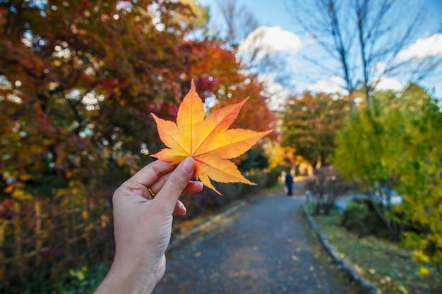 Human hand holding a red autumn maple leaves against the background of blue sky.