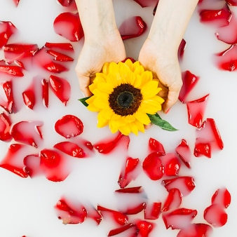 Human hand holding yellow flower over red petals floating on water