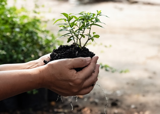The human hand holding young plant, protection and take care, environment