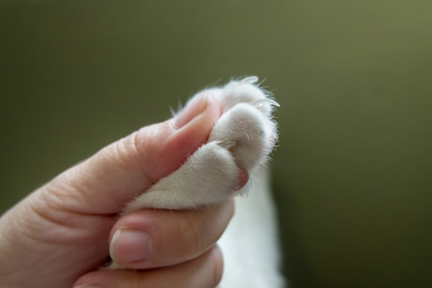 The human hand is catching the cat's paw before trimming the cat's nail.
