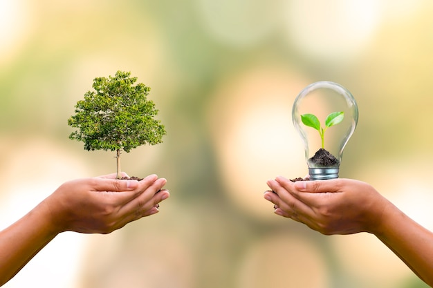지구의 날 환경 보전 개념을 보존하기 위해 인간이 손에 심은 나무와 전구에서 자라는 작은 나무