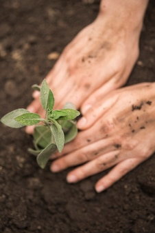 Human hand planting young plant into soil