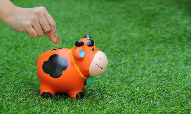 Human hand saving money in piggy/cow bank with grass