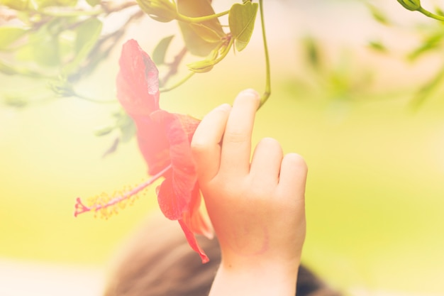 Human hand with beautiful red flower
