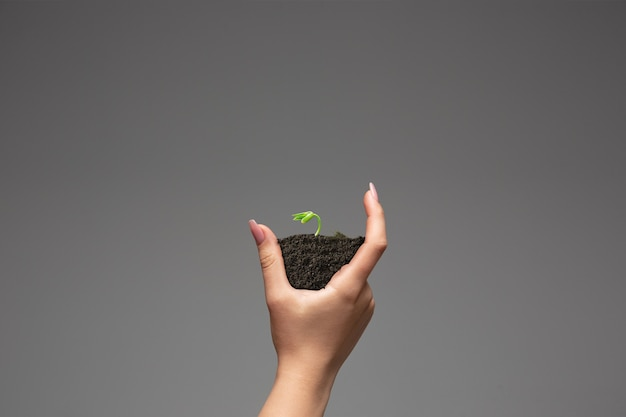 成長するビジネス環境保全の新鮮な緑の植物のシンボルを保持している人間の手と