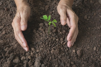 Human hands holding green small plant life concept.Ecology concept.