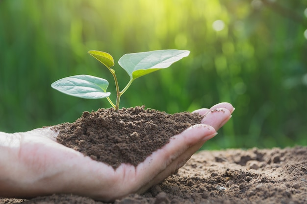인간의 손을 잡고 녹색 작은 식물 생활 개념 생태 개념입니다.