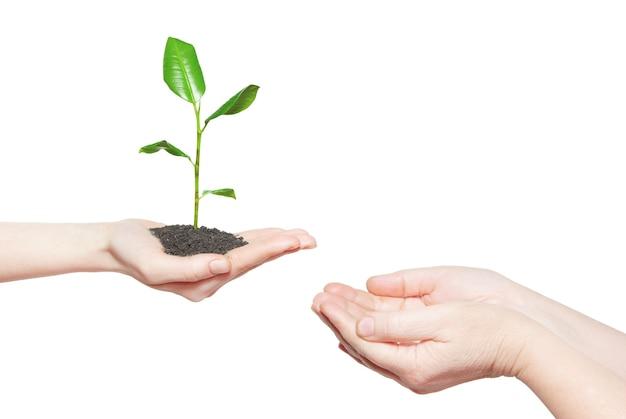 Человеческие руки, держа зеленое маленькое растение новой концепции жизни