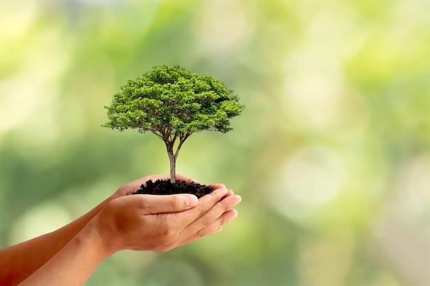 地面に植えられた植物と自然の緑を持って人間の手