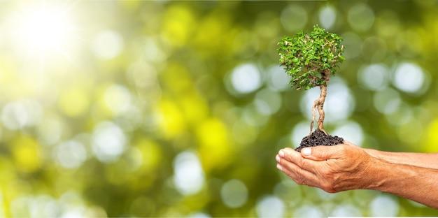 Человеческие руки, держащие растения