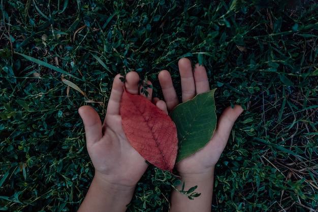 秋の赤と黄色の木の葉を保持している人間の手、子供の手のひらのクローズアップ写真。緑の草の背景。上面図