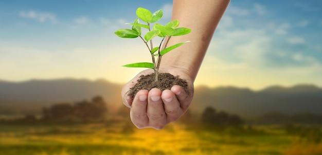 새싹을 들고 인간의 손에 어린 plant.environment 지구의 날 묘목을 재배하는 나무의 손에