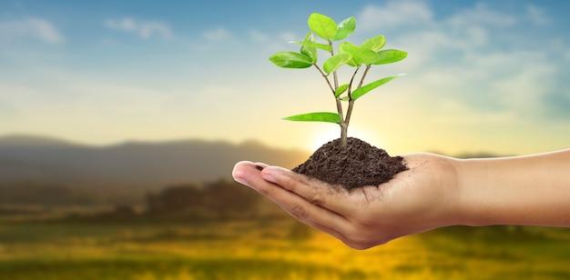 芽を持った人間の手若い植物。環境アースデイ苗木を育てる木の手に
