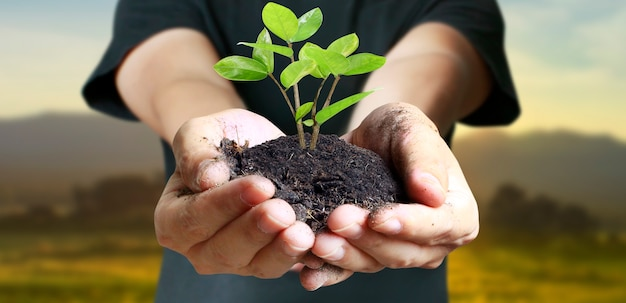 인간의 손에 새싹 젊은 식물을 들고.
