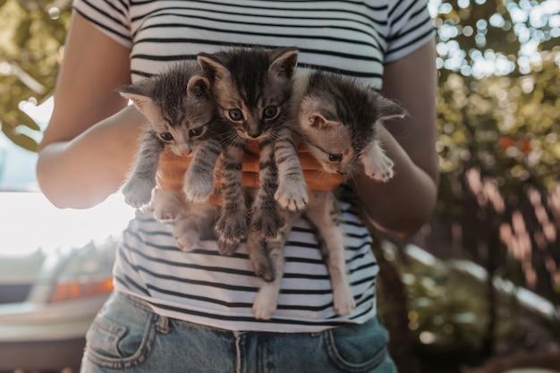 세 마리의 회색 고양이를 안고 있는 인간의 손에 귀여운 새끼 고양이와 노는 여자 동물 보호의 개념