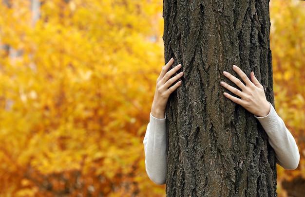 인간의 손에 공원에서 나무를 포옹