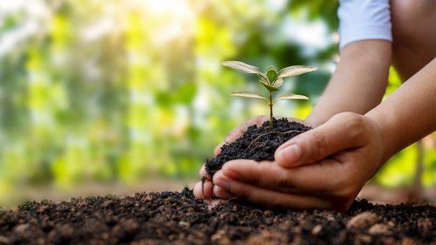 土壌に植物や木を植える人間の手とぼやけた緑の自然の背景アースデイの概念と地球温暖化キャンペーン