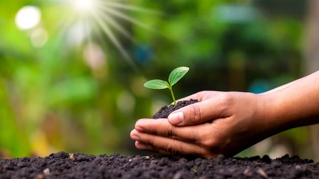 인간의 손으로 토양 지구의 날과 지구 온난화 캠페인에 묘목이나 나무를 심습니다.
