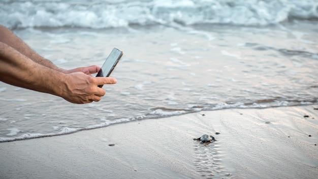 해변에서 새끼를 낳고 있는 야생 바다거북의 사진을 만드는 스마트폰으로 인간의 손