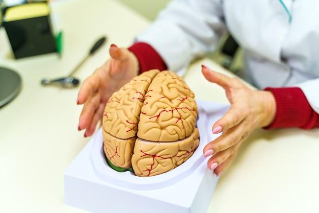 Human head anatomy model on the table. anatomy of the human brain. selective focus