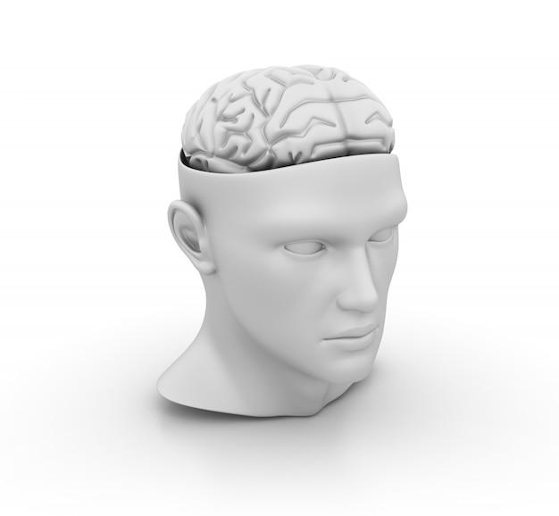 Human head with brain model
