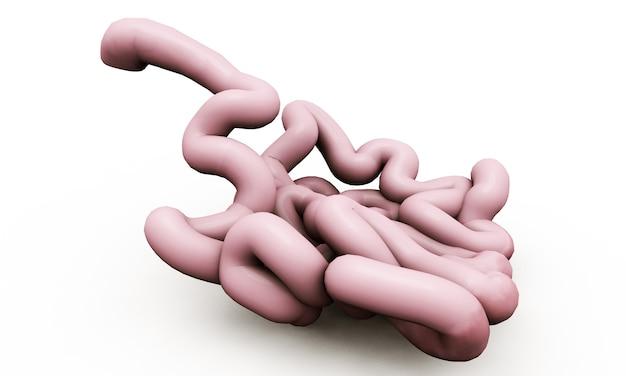 인간의 창자 해부학 그림입니다. 3d 렌더링