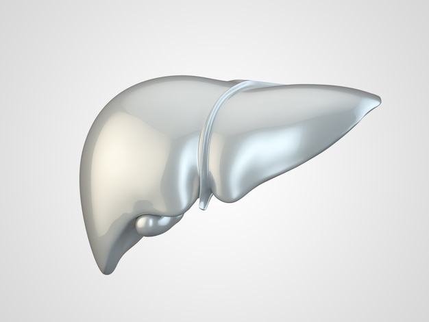 Human liver made of metal